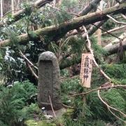 台風が過ぎて