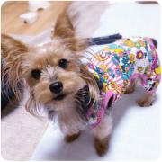 庵主さんの犬