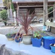 青い植木鉢