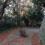 落ち葉ならぬ落ち枝
