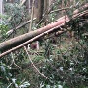 竜王山の倒木
