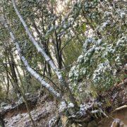 雪が急にふりましたね