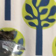 ドロボウ猫発見