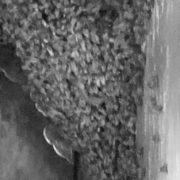 祠と日本ミツバチ3閲覧注意