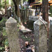 祠と日本ミツバチ4