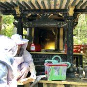 祠に日本ミツバチ2
