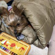 寝袋とガウガウ犬