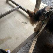 トンボが犬を観にきました