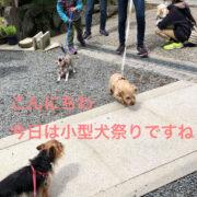 小型犬祭り