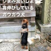 つまみ食犬